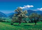 Das Foto zeigt einen Baum in Frühlingsblüte