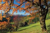 Das Foto zeigt einen Baum im Herbstkleid